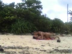 Hidden beach love motion